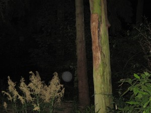 Paranormalas lodes_5